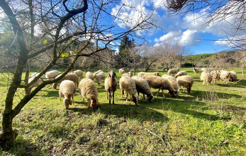 Isola d'Elba - In fattoria con Sara