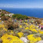 sentieri in fiore all'Elba in Primavera