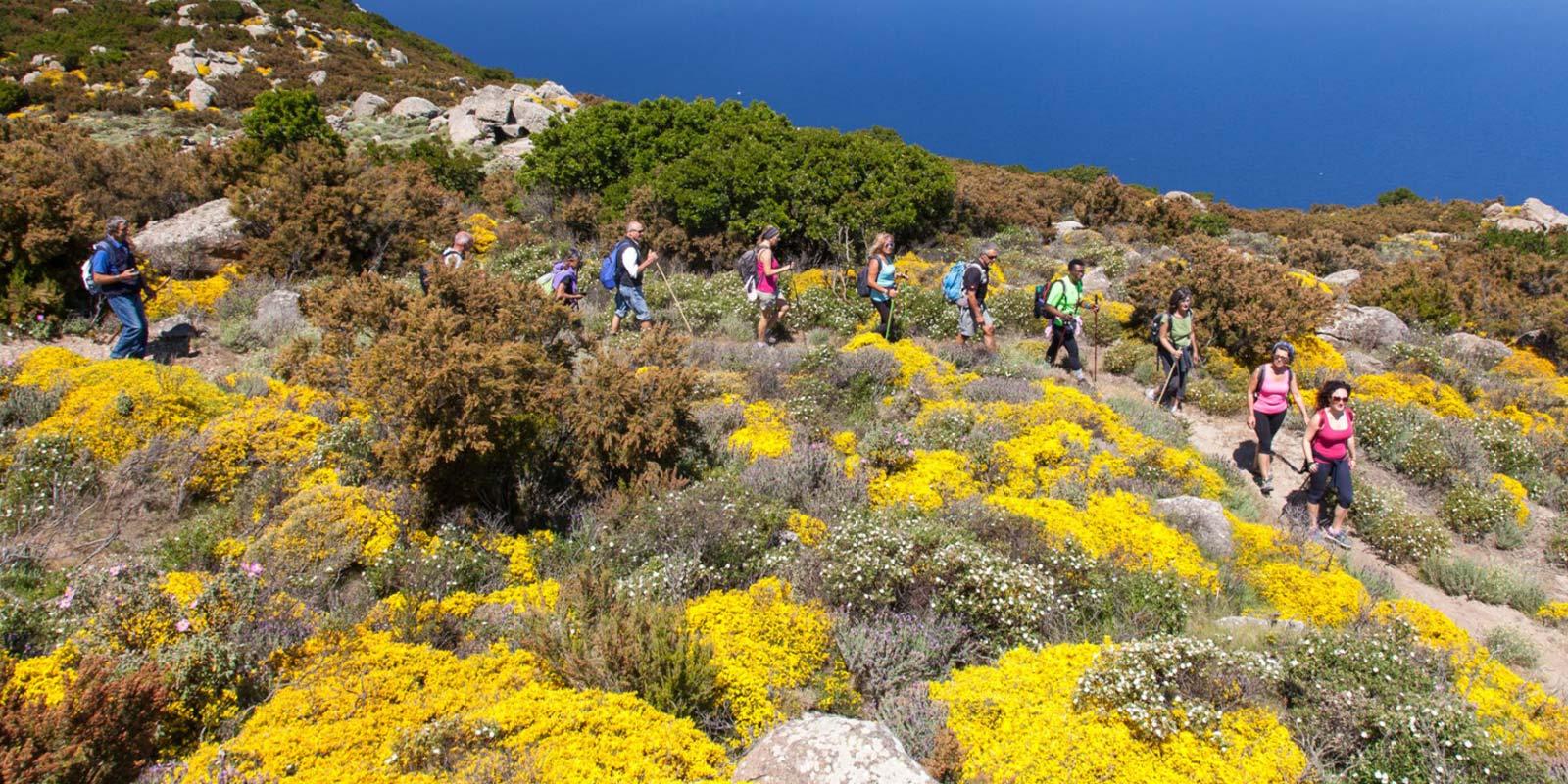 sentieri in fiore sulla gte all'Isola d'Elba in Primavera