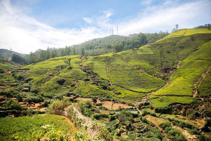 sri lanka piantagioni di tè