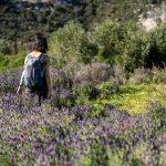 fioriture isola elba