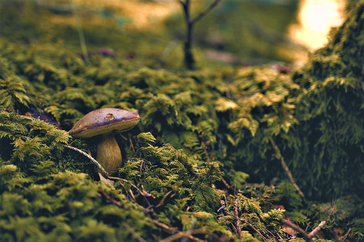 fungo sottobosco elba